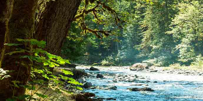 Fabulous-rain-forest-with-stream-7-layers-permaculture