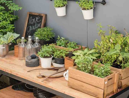 gardening tools on wooden table with plants Permaculture Zones