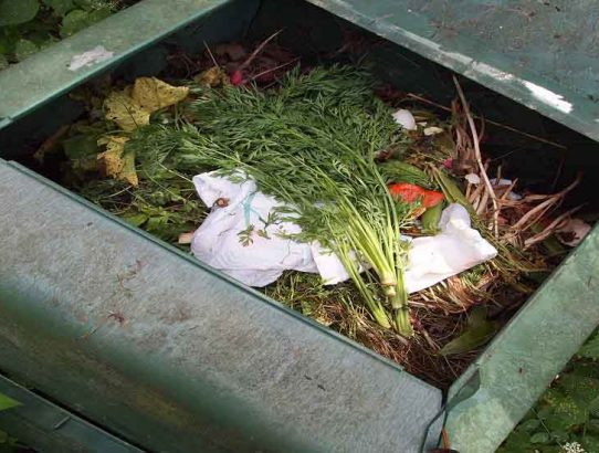 The Top 5 Reasons You Should Start Composting Right Now
